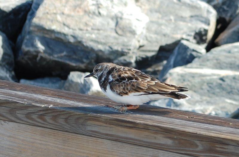 Fishlinebird
